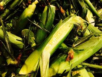 DeMile's Famous Sweet Corn